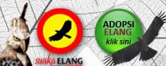 Adopsi Elang